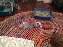 Relaxed Bonnie